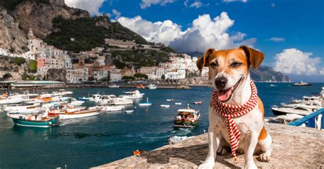 Book Your Travel To Dreamland Pet Pet Pet Product by Everything You Need To About Traveling With Your
