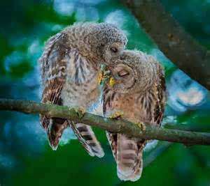 Owl Lover Owl Always You