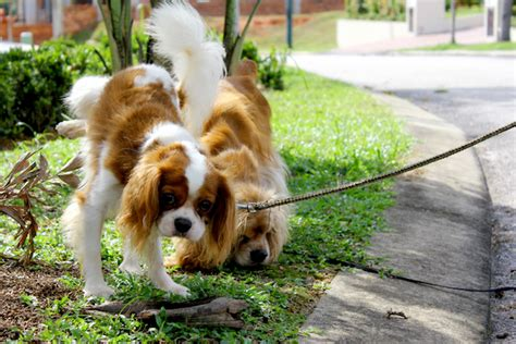 what to do when dogs pee in the house why does dog pee kill plants and what can we do about it