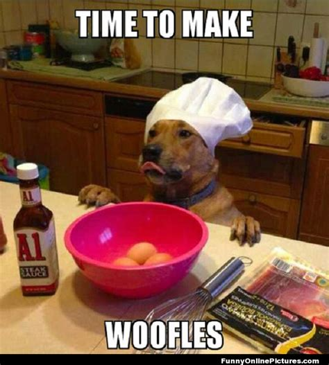 Funny Cooking Memes - doggy chef meme pic