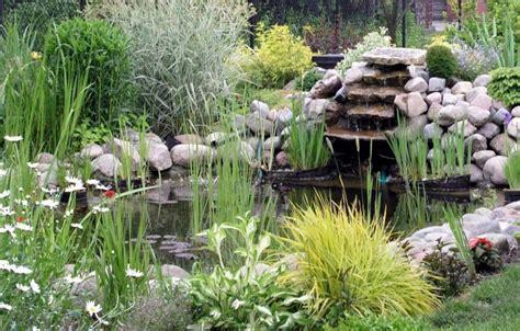 plante pour etang jardin petits bassins de jardin comment les installer pratique fr