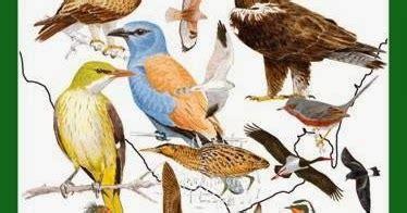 libro observar las aves bird recursos para la educaci 243 n ambiental tres libros imprescindibles para observar aves