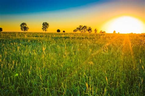 Agricultural plants on field with sunlight   Stock Photo