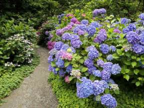 for love of hydrangeas berkeley garden coach