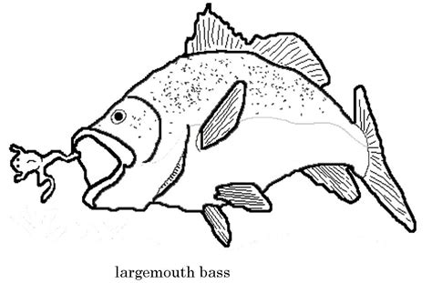 largemouth bass coloring page az coloring pages
