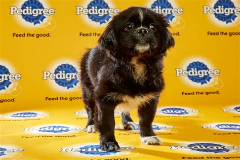 animal planet puppy live animal planet live puppy bowl photo