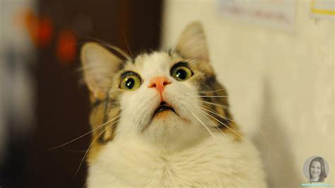 imagenes sarcasticas de gatos imagenes de gatos asustados animados