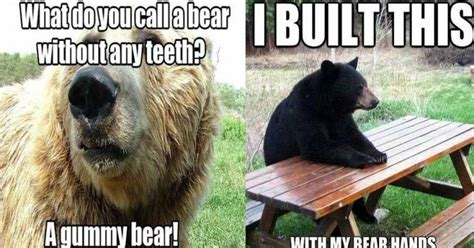 Funny Bear Memes - funny bear memes www imgkid com the image kid has it