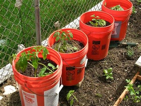 5 gallon container gardening 199 best images about repurposed on diy