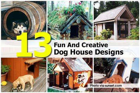 fun dog houses crazy dog houses images