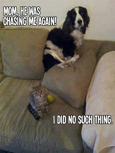 Dog And Cat Memes - funny cat dog