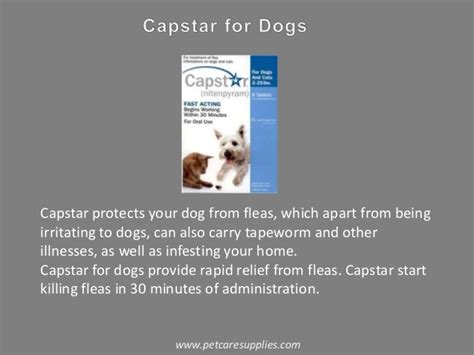 can dogs carry lice flea and tick for dogs