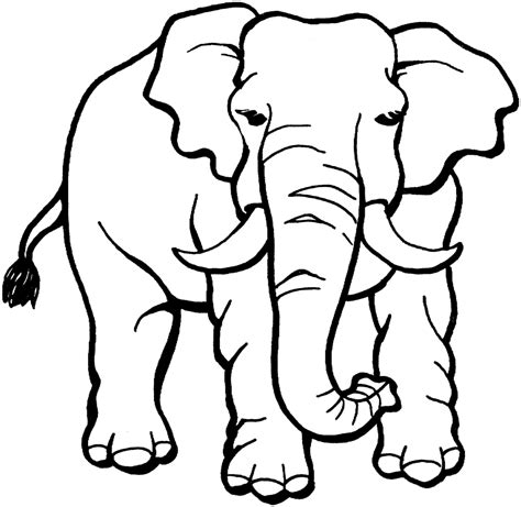 indian elephant coloring page indian elephant drawing clipart panda free clipart images