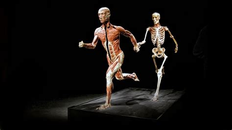 the body in the body worlds vital at the life centre charlielittleunitphotography
