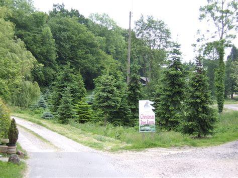 christmas tree farm sussex tree farm 169 jonathan billinger geograph britain and ireland