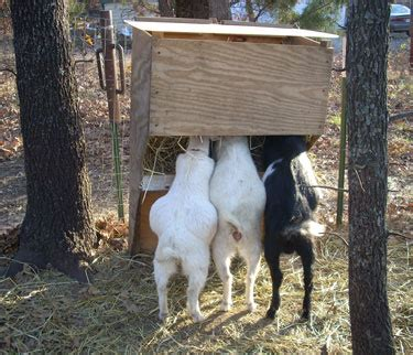 how to raise goats in your backyard how to raise goats in your backyard farm or homestead