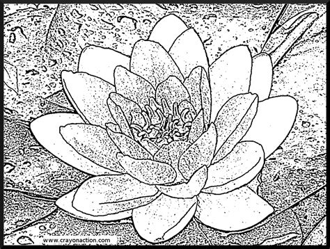 coloring pages monet s water lilies water lily coloring page crayon action coloring pages