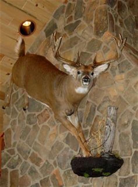 Coyote Rug Animal Mounts On Pinterest Taxidermy Deer Mounts And