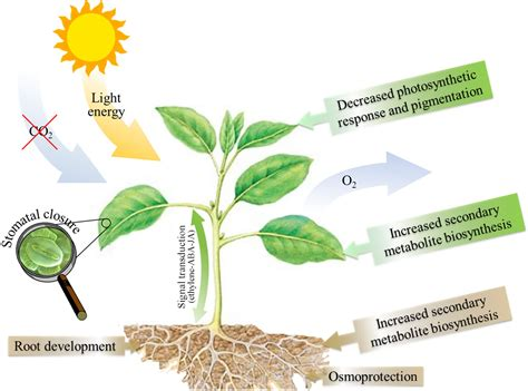 symptoms and solutions plant moisture stress impact of heat drought stress on physiological biological processes in plants