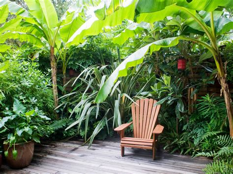 tropical backyard plants tropical garden retreat hgtv