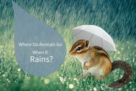where the animals go where do animals go in the rain varment guard