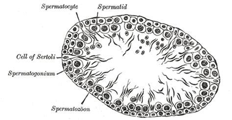 Illustrations Fig 1150 Gray Henry 1918 Anatomy Of