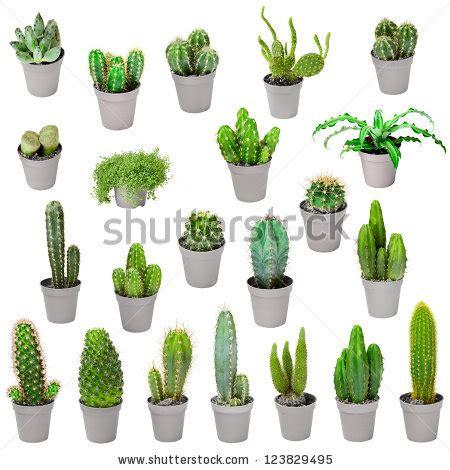 Tropical Indoor Plant Identification - indoor cactus plants uk images