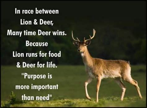 dear quotes deer quotes inspirational quotesgram