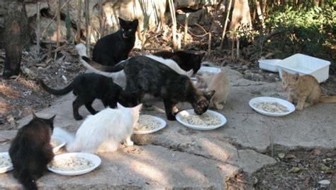 ufficio tutela animali torino la sezione oipa livorno attiva una convenzione col comune
