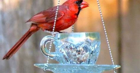 16 pics here with directions teacup hanging feeders