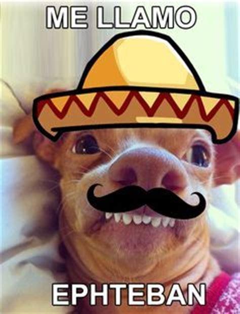 images  lisp meme dog  pinterest
