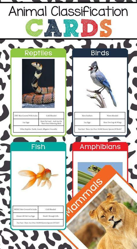 6 best images of zoo animal sorting card printables zoo 113 best images about zoology on pinterest sharks