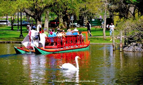 swan boats boston public garden luxury hotels near boston s public garden and boston