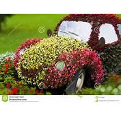 Flower Car Stock Image Of Grass Vehicle