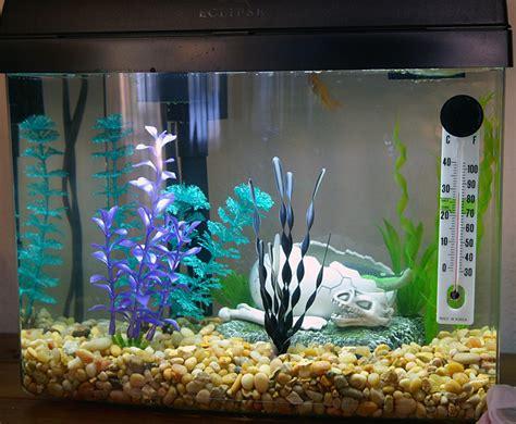membuat filter aerator aquarium might take away from the natural appearance of a tank