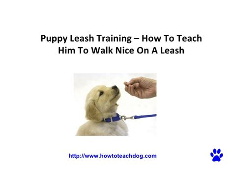 how to an on a leash puppy leash how to teach him to walk on a leash