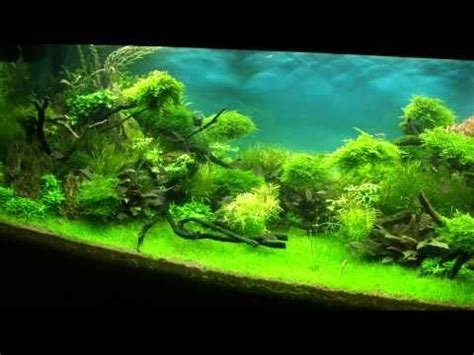 Tutorial Aquascape by Aquascape Tutorial Nature S Chaos By Findley Doovi