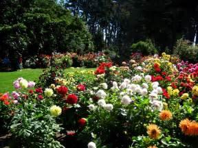 Mendocino Botanical Gardens 42 Best Dahlia Gardens Images On Flower Gardening Flowers Garden And Flowers