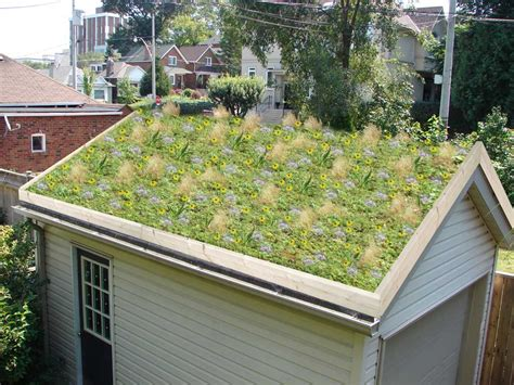 livi aprtments green roof city of norfolk virginia official website green roofs