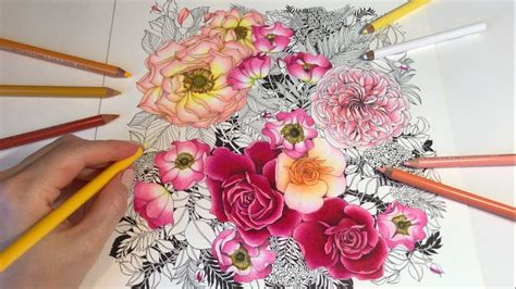rose drawing coloring rose garden part  floribunda
