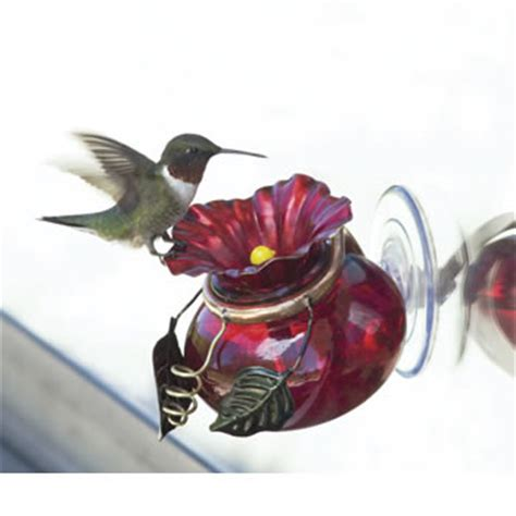 duncraft com window watch hummingbird feeder