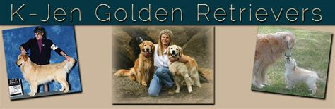 golden retriever puppies asheville nc golden retriever breeder k jen goldens reputable golden retriever breeder in