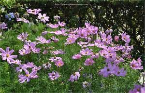 les photos du weekend fleurs du jardin du luxembourg