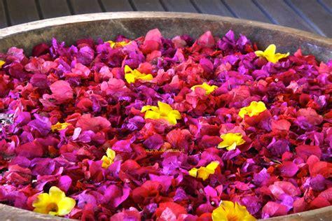 fiori galleggianti dearmas articolo mauritius l estate in inverno