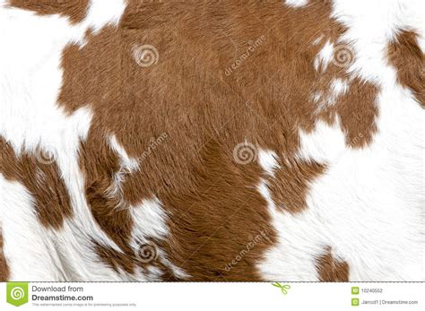 Cowhide Pictures - cowhide stock photo image of texture brown farm hair