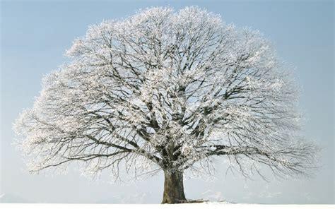 winter tree winter tree snow hd wallpaper of winter hdwallpaper2013