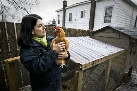 backyard chicken farmer toronto s backyard chicken farmers wait for the sky to fall wednesday toronto star