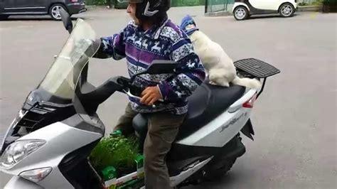 Motorrad Fahren Mit Hund by Hund F 228 Hrt Motorrad