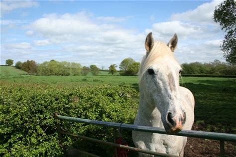 my only comfort file lone white horse my only comfort geograph org uk