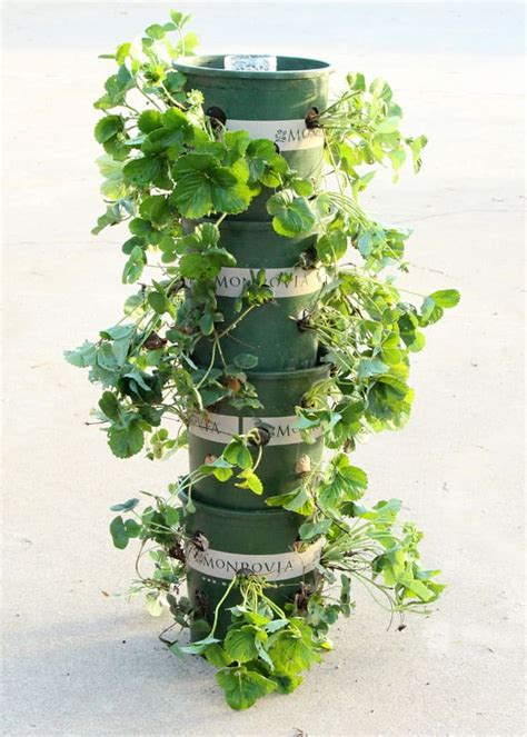 Strawberry Tower Planter by Diy Strawberry Tower With Reservoir Apiece Of Rainbow
